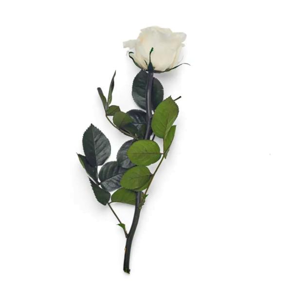 Preserved rose stem - white